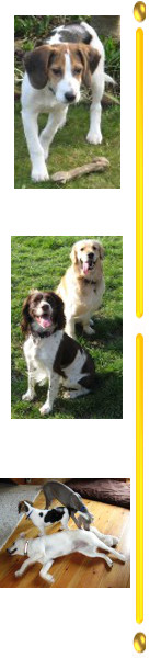 Puppy-Dog Training Slough, Woking, Hounslow, Twickenham and Richmond